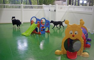 dog kennel nz