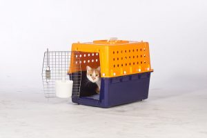 airline approved cat crate