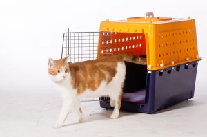 airline approved cat carrier