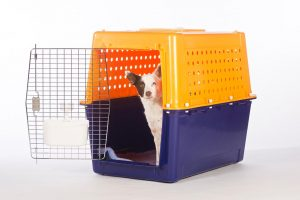 dog crate nz