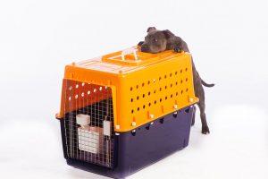 dog crates new zealand