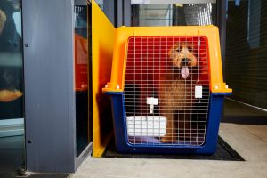 dog crates nz