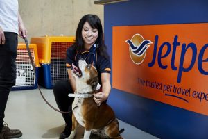 vet for pet flights domestic
