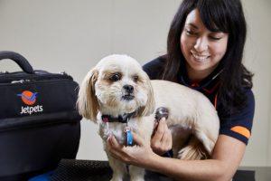 vet for pet travel nz