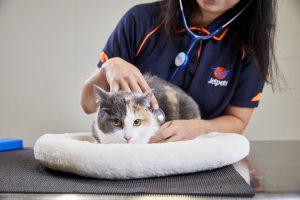 vet for pet transport