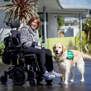 mobility dogs nz