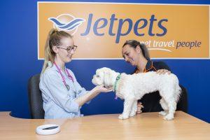 vet for flying pets nz