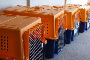 airline approved dog crates nz