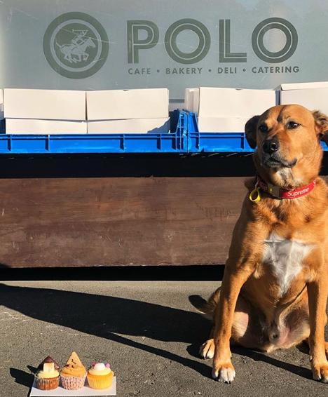 cafe polo wellington pet friendly
