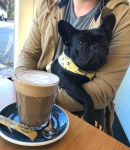 lola stays dog friendly cafe nz