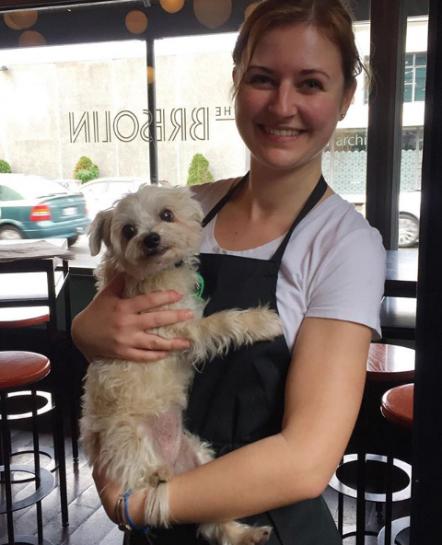 the bresolin wellington dog friendly cafe